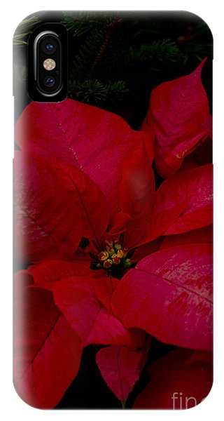 The Classic Christmas Pointsettia IPhone Case