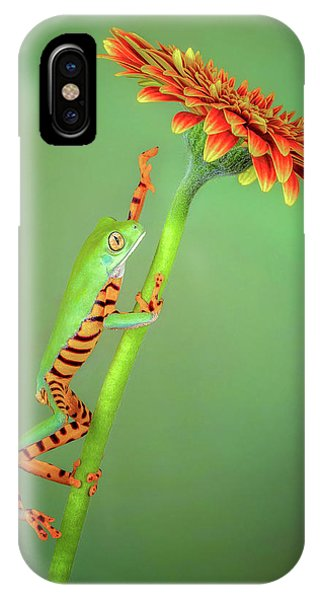 Reach iPhone Case - The Climber by Renee Doyle