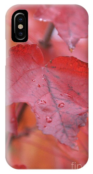 The Color Of Autumn IPhone Case