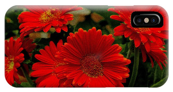 Gerbera Daisies Red IPhone Case