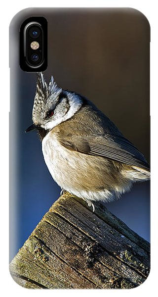The Crested Tit In The Sun IPhone Case
