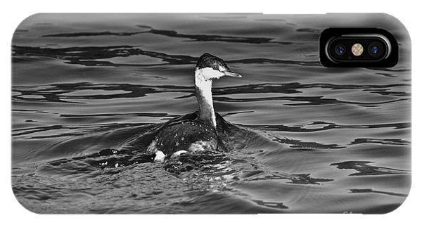 The Curious Grebe IPhone Case