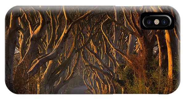 Alley iPhone Case - The Dark Hedges In The Morning Sunshine by Piotr Galus