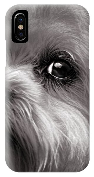 IPhone Case featuring the photograph The Dog Next Door by Bob Orsillo