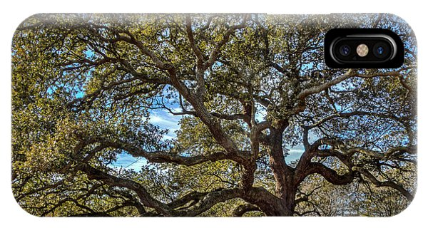 The Emancipation Oak Tree At Hu IPhone Case