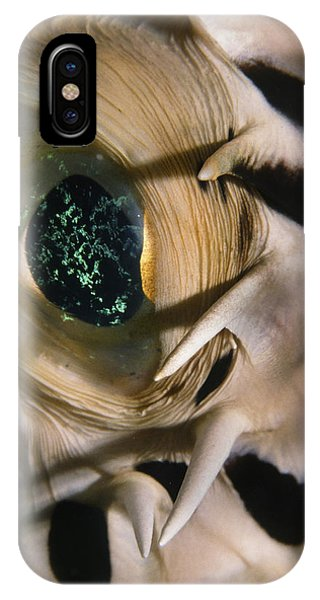 The Eye Of A Pufferfish IPhone Case