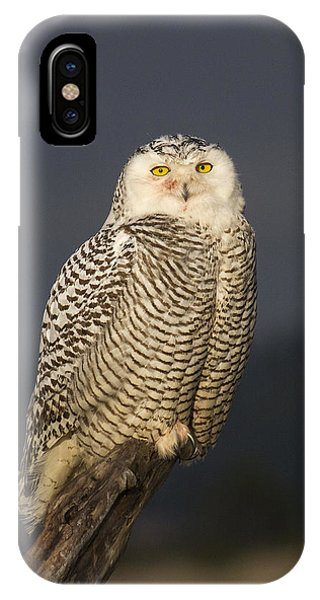 The Eyes Are It IPhone Case