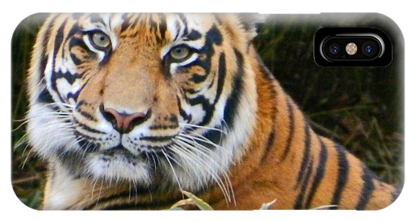 The Eyes Of A Sumatran Tiger IPhone Case
