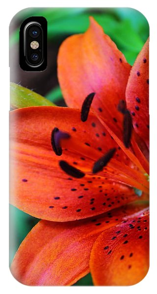 The First Lily IPhone Case