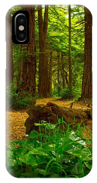 The Forest Of Golden Gate Park IPhone Case
