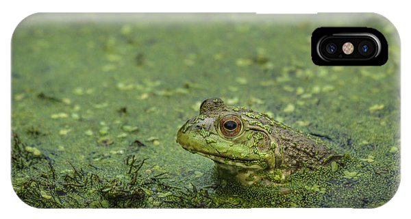 A Lesson In Stillness From A Frog IPhone Case