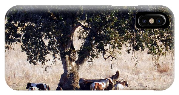 The Gathering Tree IPhone Case