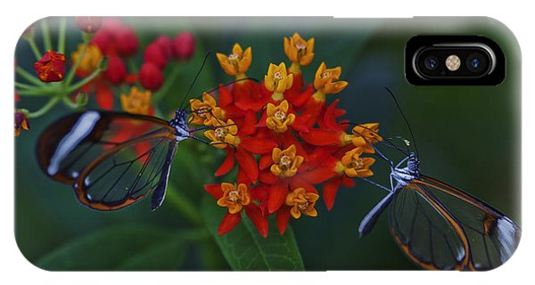 The Glasswinged Butterfly IPhone Case
