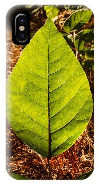 Crossville iPhone X Case - The Glow Of Leaf Venation  by Douglas Barnett