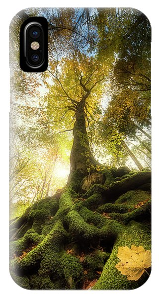 Woods iPhone Case - The Goodbye Of A Leaf by Alberto Ghizzi Panizza
