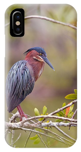 The Green Heron At Blue Hole IPhone Case