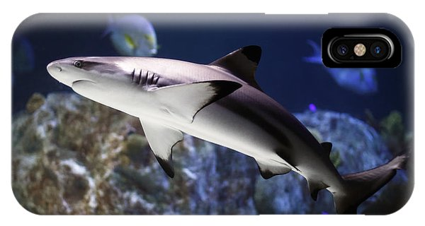 The Grey Reef Shark - Carcharhinus Amblyrhynchos IPhone Case