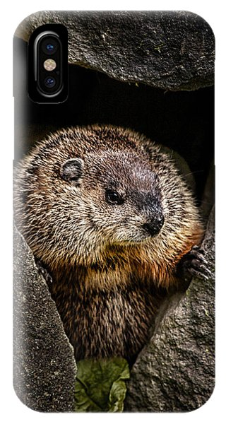 Groundhog iPhone Case - The Groundhog by Bob Orsillo
