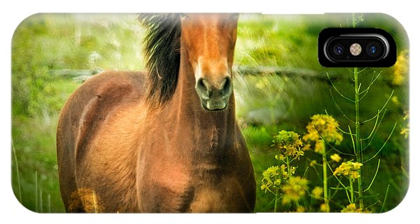 The Horse In The Wildflowers IPhone Case