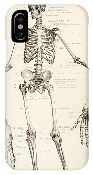 Bone iPhone Case - The Human Skeleton by English School