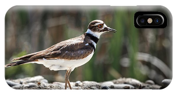 Killdeer iPhone Case - The Killdeer by Robert Bales