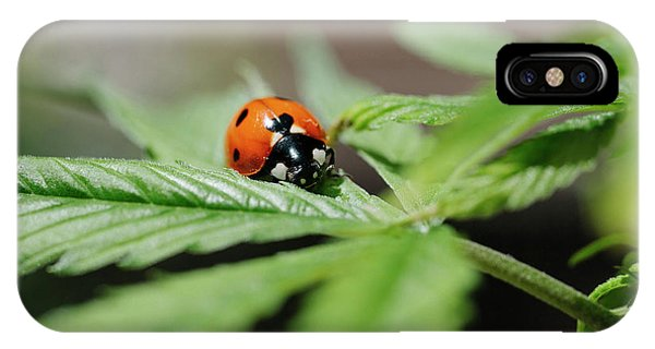 Ladybug iPhone Case - The Ladybug And The Cannabis Plant by Stock Pot Images