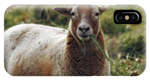 Feed My Sheep IPhone Case