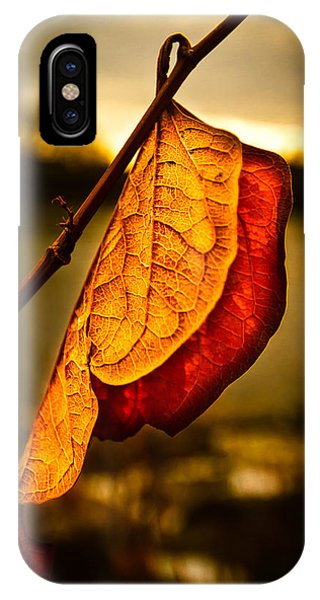 Uplift iPhone Case - The Leaf Across The River by Bob Orsillo