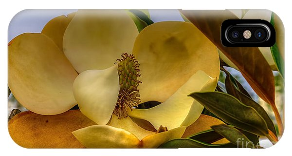 The Magnolia IPhone Case