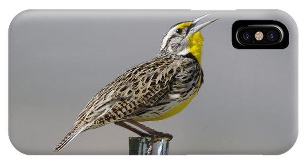 The Meadowlark Sings  IPhone Case