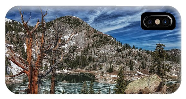 The Old Tree And Lake Mary Phone Case by Mitch Johanson