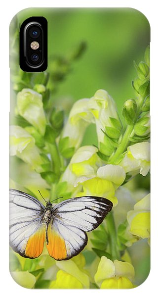 The Orange Gull Butterfly, Cepora Phone Case by Darrell Gulin