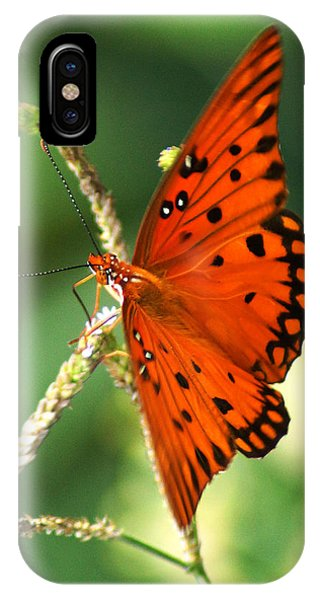 The Passion Butterfly IPhone Case