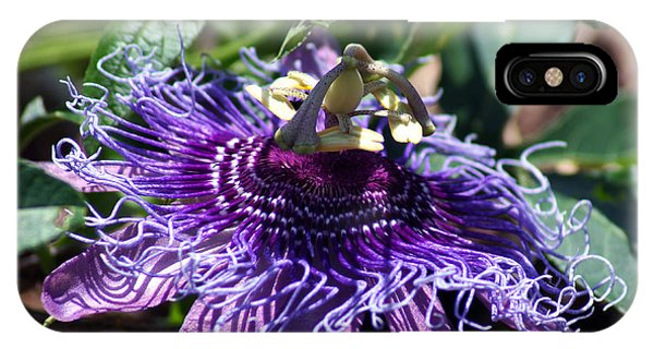 The Passion Flower IPhone Case