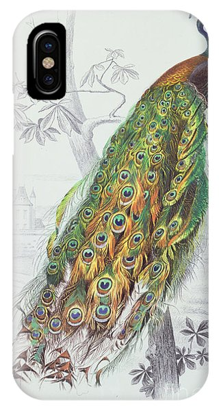 Peacocks iPhone Case - The Peacock by A Fournier