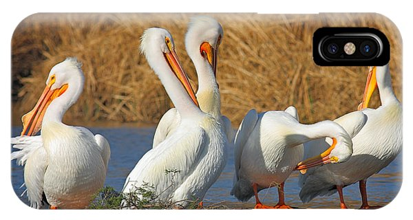 The Pelican Gang IPhone Case