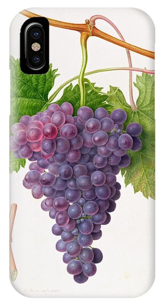 The Poonah Grape IPhone Case