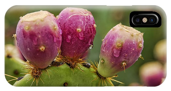 The Prickly Pear  IPhone Case