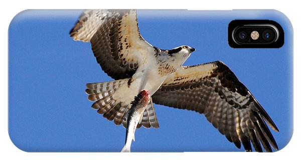 Ospreys iPhone Case - The Provider by Quinn Sedam