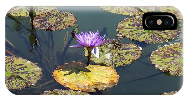 The Purple Water Lily With Lily Pads - Two IPhone Case