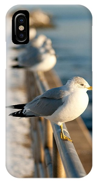 The Ring-billed Gull IPhone Case