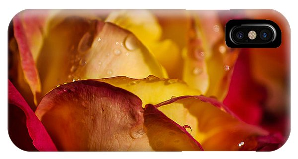 iPhone Case - The Rose by George Fredericks
