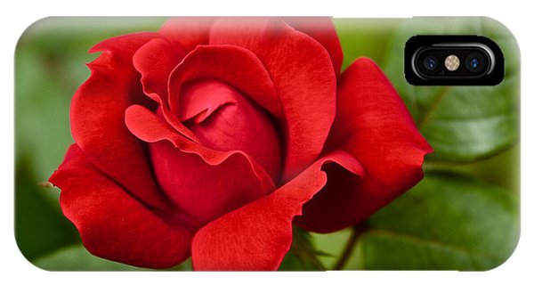 IPhone Case featuring the photograph The Rose by William Norton