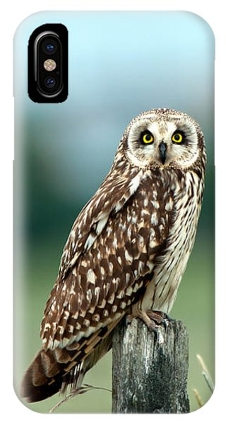The Short-eared Owl  IPhone Case