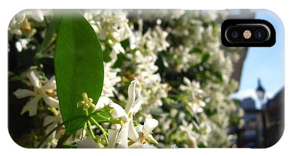 The Smell Of Jasmine In The Air by NOLA Daily Photo