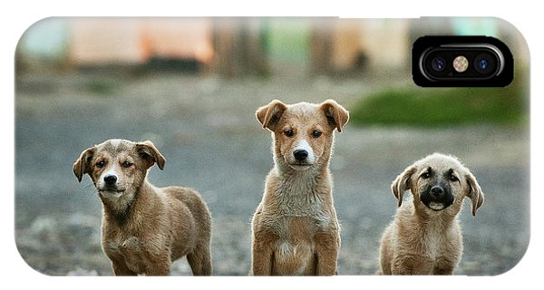 Cute Puppy iPhone Case - The Three Musketeers by Sorin Onisor