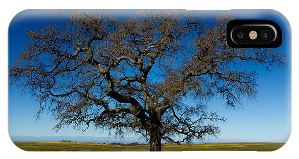 The Tree On Table Mountain IPhone Case