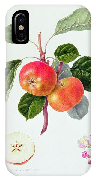 Botanical iPhone Case - The Trumpington Apple by William Hooker