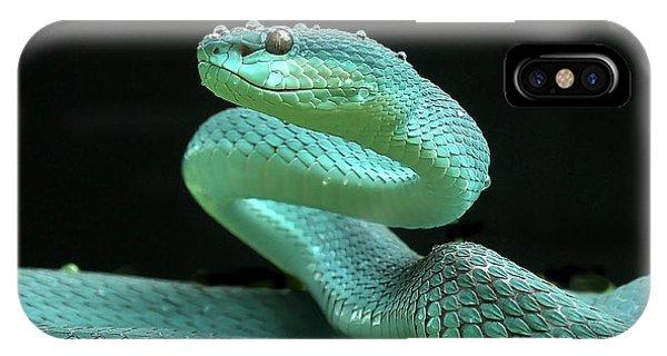 Danger iPhone Case - The Viper by Yan Hidayat