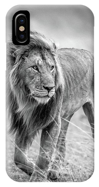 Lion iPhone Case - The Wary Champion by Jeffrey C. Sink